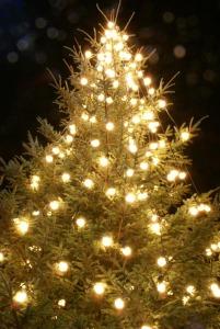 christmas-tree_web