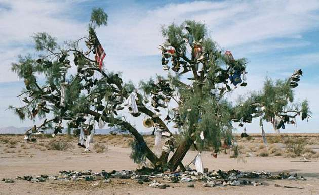 shoetreetamarisk