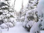 snow-in-winter-wallpaper_1024x768_87843