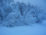 wallpaper_winter_trees