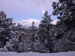 winter-trees-wallpaper_800x600_87807