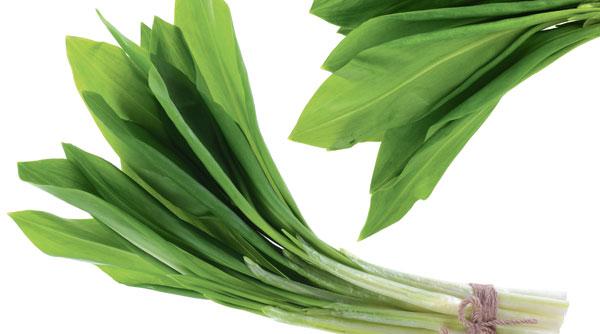 large-wild-garlic-34