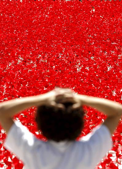 100thousands_poppies_madrid