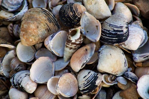 river_shells_6097
