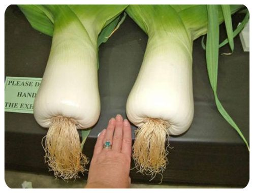 giant_vegetables