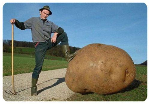 large_potato-783382