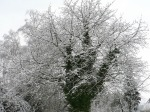 17321-1024x768-winter