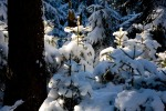 20080330135359_winter_forest