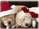 249330-1024x768-christmas