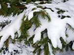 32272-1024x768-Snow-on-Fir