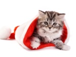 371687-1024x768-fluffy-cat-in-santa-hat-wallpapers_16426_1280x800