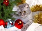 501327-1024x768-cat