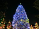 christmas-tree-beautiful-blue