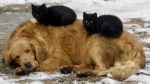 kittens-sleeping-on-a-dog-in-the-snow