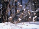 _nature-wallpaper-snow-winter-scene-33