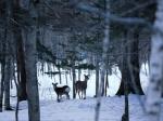 _nature-wallpaper-snow-winter-scene-38