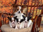 cute_dog_family-1227
