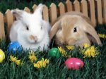608617-1024x768-ea-bunny-300-eggs-and-flowers