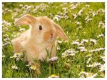 624853-1024x768-Baby_Rabbit_by_Squadz2000