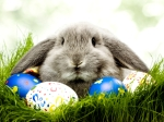 645973-1024x768-easter-bunny