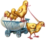 baby-chicks-2
