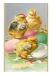 EA-00067-C~Three-Chicks-and-Eggs-Posters
