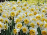 flowers_143-1024x768