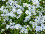 flowers_334-1024x768