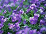 flowers_537-1024x768