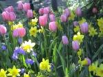 SPRING-FLOWERS-TULIPDAFFADILS