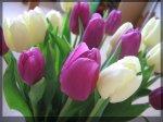 Tulips-1400x1050