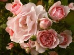 357748-1024x768-Bouquet-of-Roses