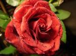 405892-1024x768-flower-69