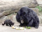 CAT AND BEAR BEST OF FRIENDS AT A ZOO