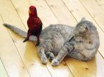 Cat-bird