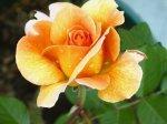 Flower 410