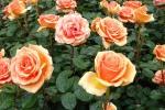 flowers-7-40