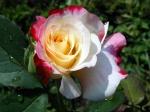Natures-Flower-31-8LPU5MQQWD-1024x768