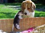 sweet-friends