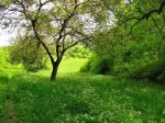 395083-1024x768-tree-on-grass