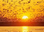 695983-1024x768-Bird_Lake