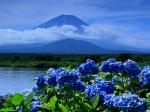 704509-1024x768-blue-beauty