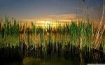 cattails_in_pond-wallpaper-1280x800