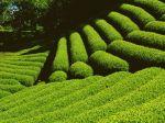 green-farm-wallpaper_1024x768_47904