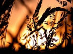 Nature_Plants_Hay_in_sunset_light_008434_