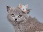 910978-1024x768-cat.n.mouse