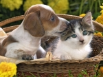 dog_cat_basket_taking_care_2273_1024x768