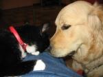 dog_cat_black_muzzle_2278_1024x768