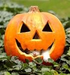 halloween-cat-750006