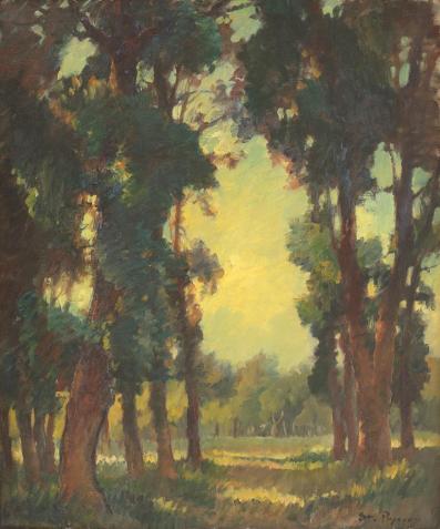 Ștefan Popescu - Luminiş de pădure